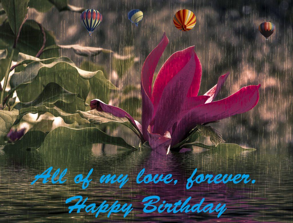 flower, pond, birthday