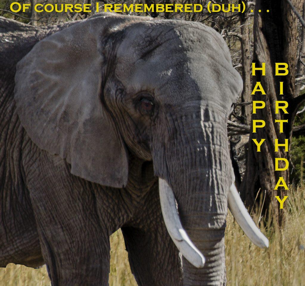 elephant rembers birthday