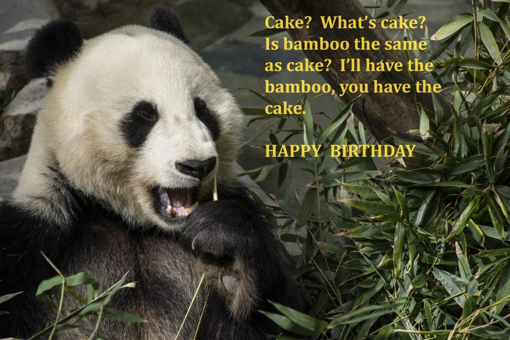 bamboo, cake, panda, birtday