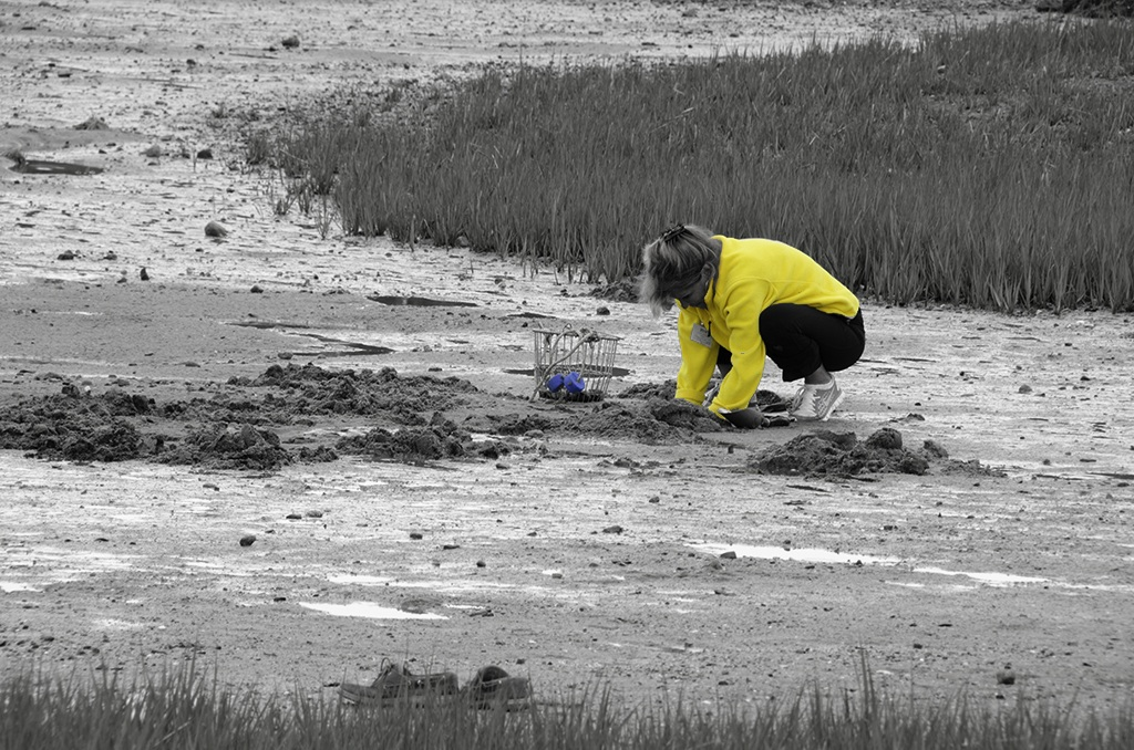 Clamming, Cape Cod MA. B&W, Blue and Yellow