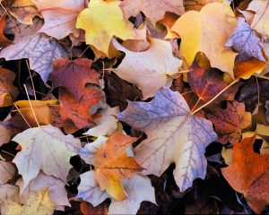 alluring fall leaves